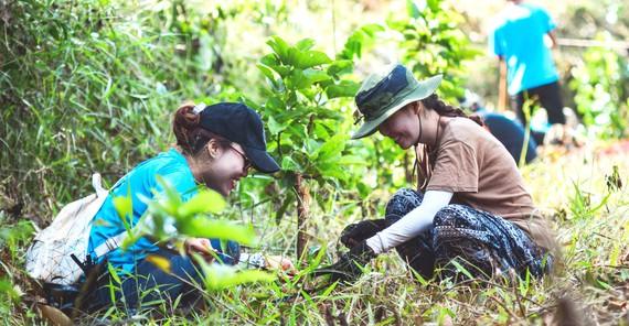 """Bạn trẻ tham gia trồng rừng ở Đắk Nông do JOY và nhóm """"Trồng 1 triệu cây rừng 1 năm"""" tổ chức."""