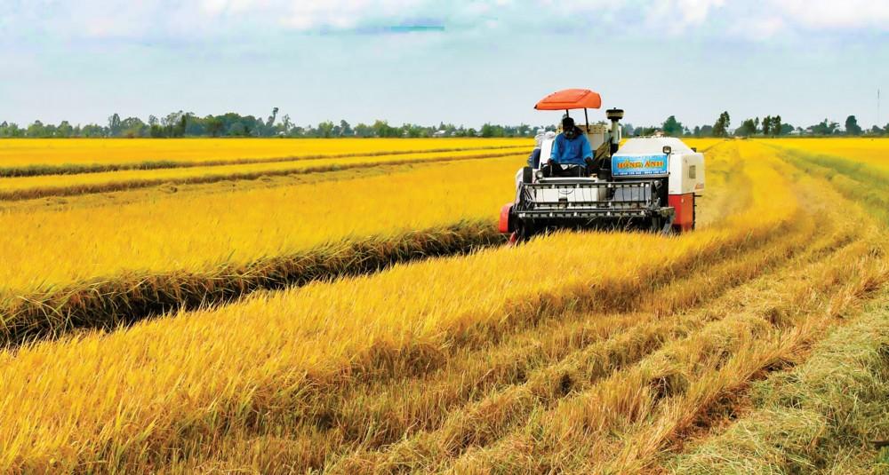 """ĐBSCL được xem là """"vựa lúa"""" của cả nước, có vai trò quan trọng trong đảm bảo an ninh lương thực quốc gia. Trong ảnh: Thu hoạch lúa tại huyện Vĩnh Thạnh, TP Cần Thơ."""