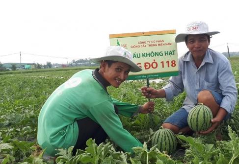 Nông dân tỉnh Sóc Trăng chuyển đổi tái cơ cấu sản xuất nông nghiệp thích ứng biến đổi khí hậu. Ảnh: CTV.