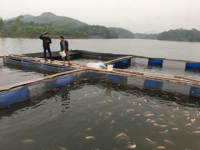 Một số hộ dân đầu tư nuôi cá lồng trên hồ để phục vụ du khách. Ảnh: Đồng Văn Thưởng.