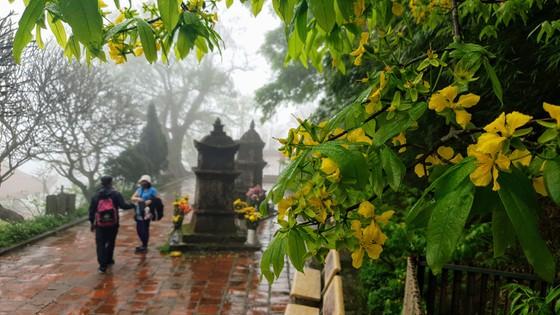 Tháng 2 âm lịch là thời điểm hoa mai vàng nở rộ và thường kéo dài trong 1 tháng. Cành mai vươn ra đón nắng xuân, gió xuân, tô điểm thêm cho bức tranh xuân của đất trời Yên Tử.