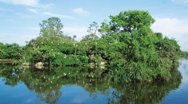 Cồn Chim hiện là điểm đến lý tưởng cho khách du lịch ở tỉnh Bình Định.