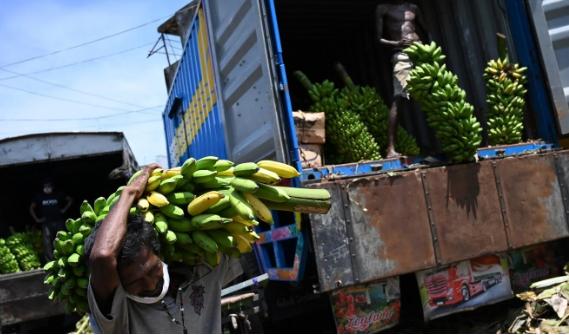 Nông dân vận chuyển chuối đi tiêu thụ ở Sri Lanka. Ảnh: AFP