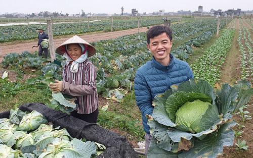 Thu hoạch rau tại Nam Định. Ảnh: TRẦN KHÁNH.