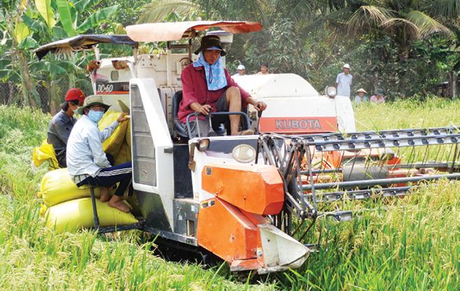 """Nhiều chủ máy gặt đập liên hợp ở vùng Đồng Tháp Mười cũng khốn đốn vì """"cò thu hoạch""""."""