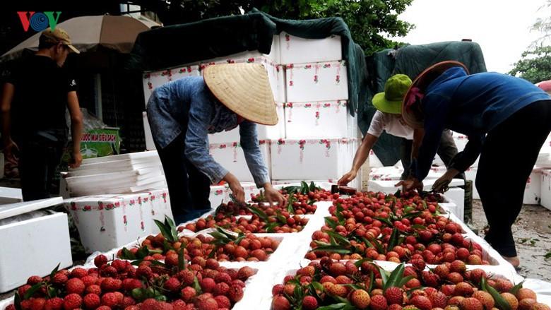 Thị trường nội địa khoảng 100 triệu dân nếu được khai thác tốt thì vải thiều Bắc Giang không phải lo lắng đầu ra.