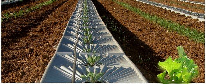 Khay thu thập nước tười cho cây trồng từ không khí.