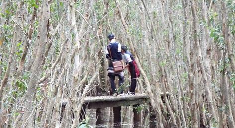 Du khách tham quan rừng tràm tại Mộc Hóa.