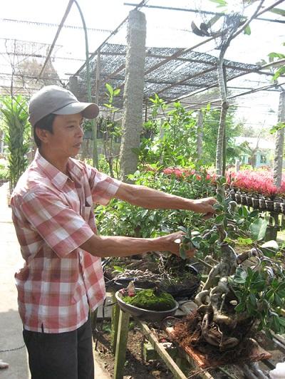Nhiều chủ vườn ở TP.Sa Đéc quan tâm chăm sóc, sửa chữa cây kiểng nhằm tạo sự thu hút khách du lịch