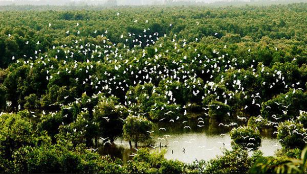 """Những đàn chim sum vầy chơi """"trò chơi tạo hình"""" trên vùng trời bình yên."""