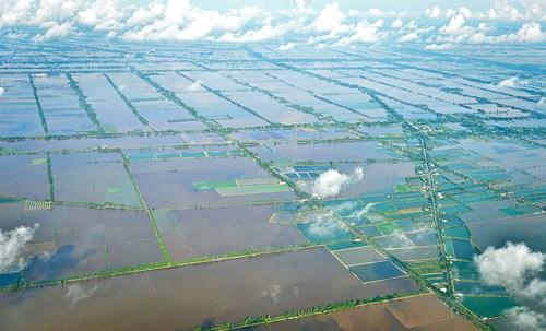 Năm nay lũ về sớm, mới đầu tháng 7 mà nước đã tràn đồng ở các huyện biên giới của hai tỉnh An Giang, Đồng Tháp.