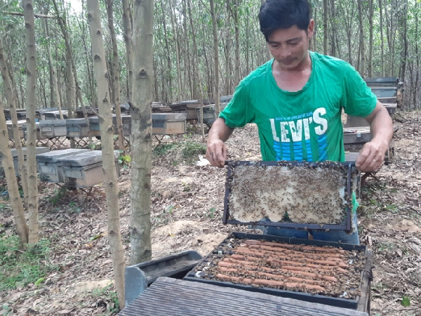 Nuôi ong lấy mật dưới tán rừng là một trong những nghề mang lại thu nhập không nhỏ cho người dân ở Dương Hòa. Ảnh: Tiến Thành.