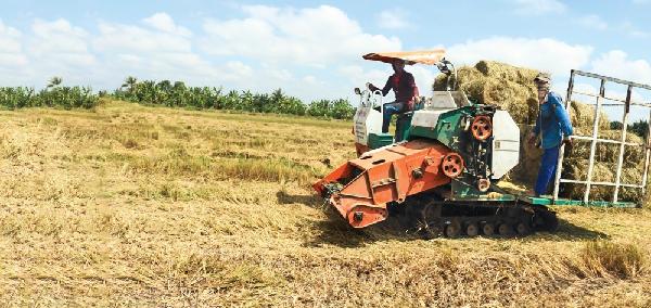 Thu gom rơm bằng máy cuốn rơm đa năng (máy tự hút, cuốn rơm lại thành cuộn và đưa lên thùng xe) tại quận Ô Môn, TP Cần Thơ.
