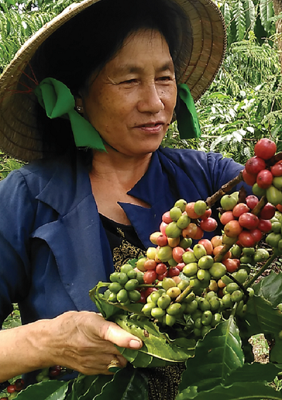 Nhiều nỗi lo khiến người trồng cà phê không có được mùa thu hoạch với niềm vui trọn vẹn.