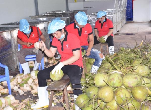 Sơ chế dừa tươi xuất khẩu tại Công ty Vina T&T. Ảnh: Minh Đảm.