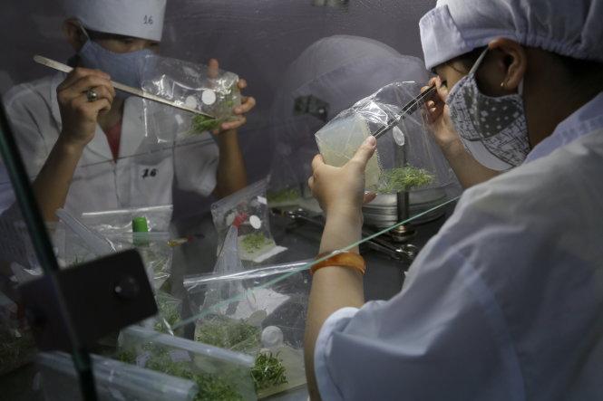 Sản xuất cây giống bằng nuôi cấy mô tại công ty giống PH Biotech (P11, Đà Lạt)