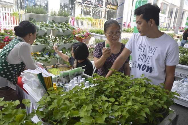 Du khách còn được tư vấn, tìm hiểu về cách trồng, chăm sóc vườn rau sạch có thể áp dụng tại nhà